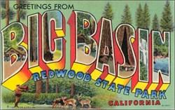Big Basin Redwood State Park California Postcard