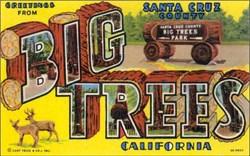 Big Trees California Postcard