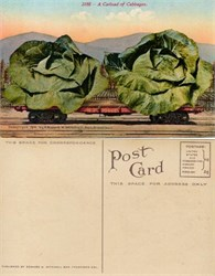 Giant Cabbage on Train Postcard from 1910