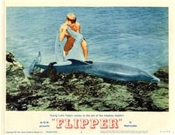 Flipper Lobby Card Starring Luke Halpin - 1963