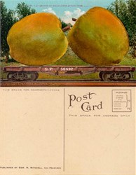 Giant Belleflower Apples on Southern Pacific Railroad Postcard