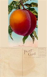 Giant Peach Postcard