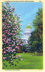 A Glimpse of the State Capitol from the Park - Sacramento, California