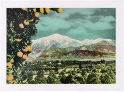 Jumbo Postcard of the Heavily Laden Orange Trees and Lofty Snow Covered Mountains, Los Angeles County, California