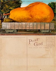 Mammoth Pear Postcard from 1910