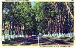 "Peninsula Highway, U.S. 101 ""El Camino Real"" Postcard"