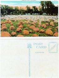 Postcard from a pumpkin field in California