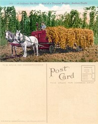 Postcard of a California Hop Field, Road of a Thousand Wonders, Southern Pacific 1910