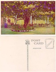 Postcard of a Giant Grape Vine, San Gabriel Mission, California