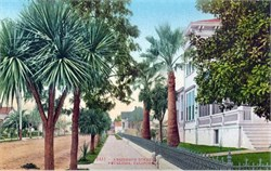 Residence Street Petaluma, California Postcard