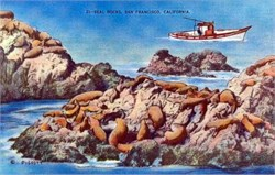 Seal Rocks, San Francisco, California Postcard