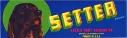 Setter Brand - Exter, California