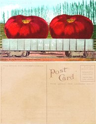 Giant Tomatoes Postcard from 1910