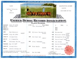 United Duroc Record Association - Peoria, Illinois 1941
