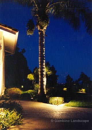focus landscape lighting application picture tall tree lighting