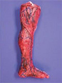 Skinned Left Leg Prop