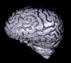Brain Prop