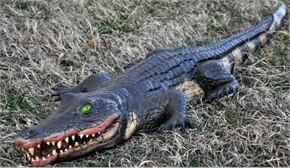 Halloween Prop Foam Filled 4' Swamp Gator