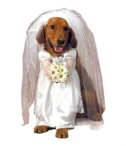 Bride Dog Costume - Small