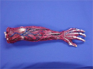 Skinned Left Arm Prop