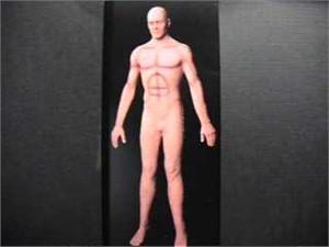 Male Flex Body