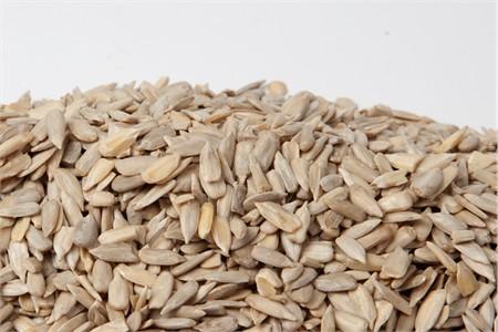 No Shell Raw Sunflower Seeds (16 oz Bag)