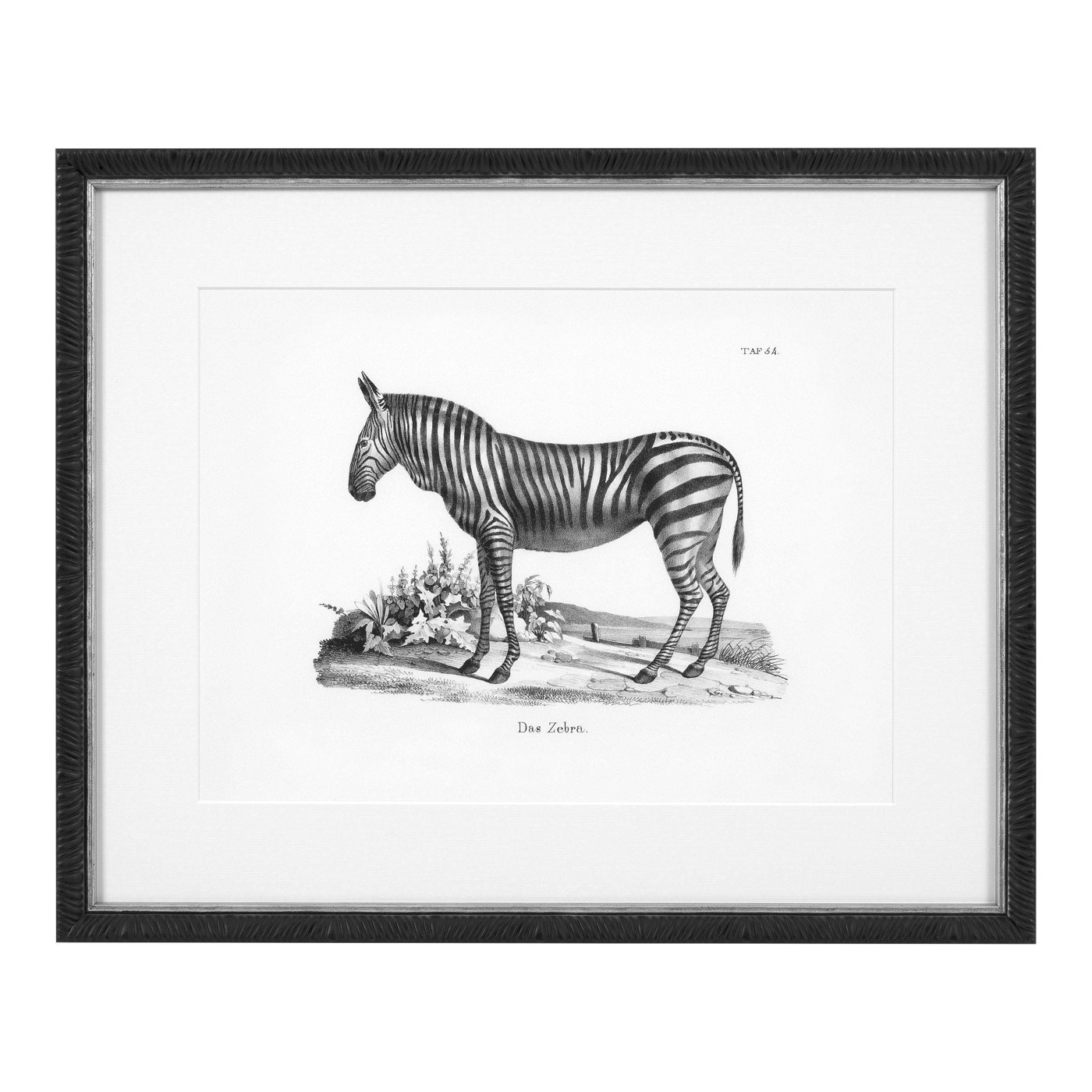 Zoology Animal Prints | Set of 6